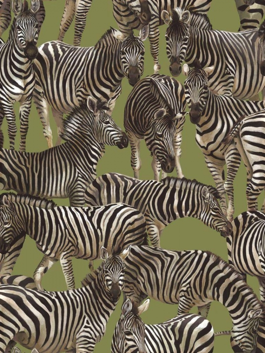 Living Wonders - Zebras
